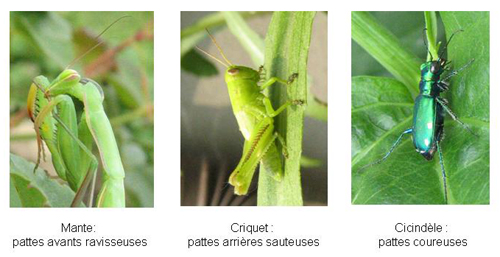 Pattes insectes